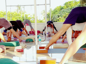 Multistyle Yoga TTC